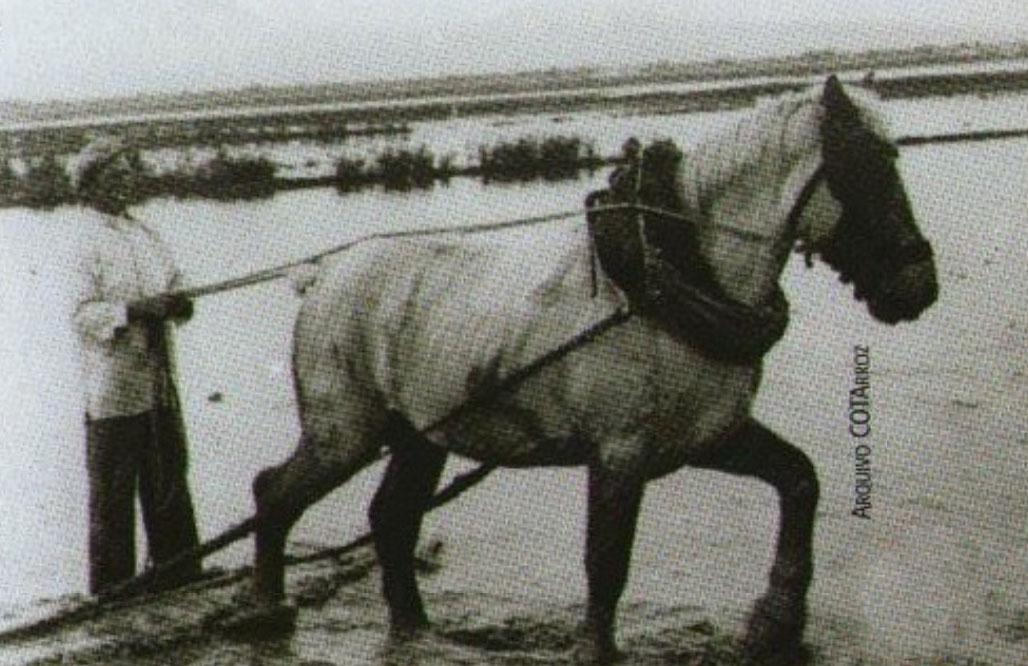 A história do arroz em Portugal