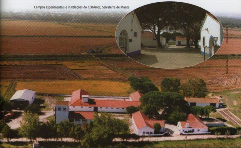 produção do Arroz em Portugal